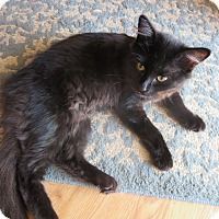 Adopt A Pet :: Snickers - Coos Bay, OR