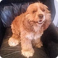 Adopt A Pet :: Piper - Sacramento, CA