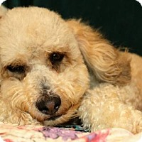 Adopt A Pet :: Bindi - sylmar, CA