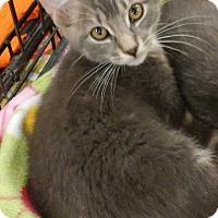 Adopt A Pet :: Pawn - Warrenton, MO