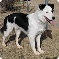 Adopt A Pet :: Scout - Palmdale, CA