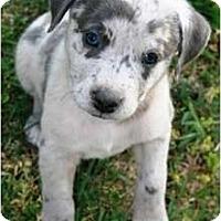 Adopt A Pet :: Aidan - Richmond, VA