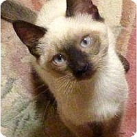 Adopt A Pet :: Suzie - Gilbert, AZ
