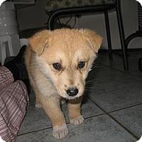 Adopt A Pet :: Lionel - Egremont, AB