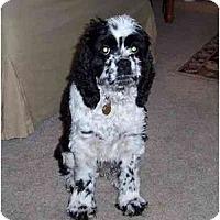 Adopt A Pet :: Gracie - Tacoma, WA