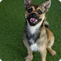 Adopt A Pet :: Sgt Pepper - Mission Viejo, CA
