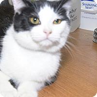 Adopt A Pet :: Umi - Medina, OH