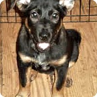 Adopt A Pet :: Sonja - Clearwater, FL