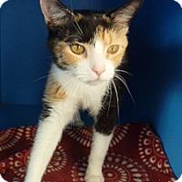 Adopt A Pet :: Butterscotch - Hamburg, NY