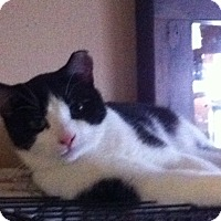 Adopt A Pet :: Jasper (foster) - Toronto, ON