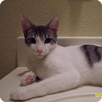 Adopt A Pet :: Fiesty - Spring, TX