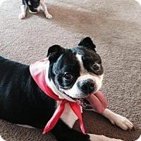 Adopt A Pet :: Benny Bruce - various cities, FL