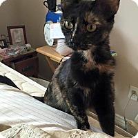 Adopt A Pet :: Sasha - Newport Beach, CA