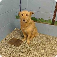 Adopt A Pet :: A489793 is in Danger at San Bernardino - Beverly Hills, CA