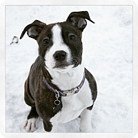 Adopt A Pet :: Clementine - West Allis, WI