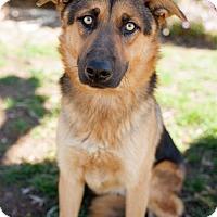 Adopt A Pet :: Nordic - San Diego, CA