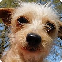 Adopt A Pet :: Izzy - MINNEAPOLIS, KS