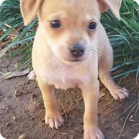 Adopt A Pet :: Mulder - Henderson, NV
