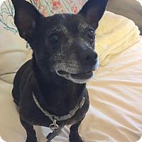 Adopt A Pet :: Moxie - Boise, ID
