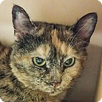 Adopt A Pet :: Mae West - Albany, NY