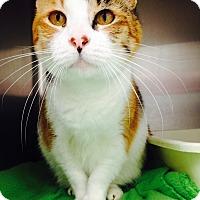 Adopt A Pet :: Cali - Newport Beach, CA