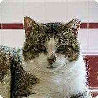 Adopt A Pet :: Sox - Manitowoc, WI