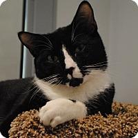 Adopt A Pet :: Diablo - Lafayette, NJ