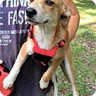 Adopt A Pet :: Jessica Destin