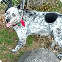 Adopt A Pet :: JAKE - Traverse City, MI
