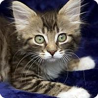 Adopt A Pet :: Emily - St Louis, MO