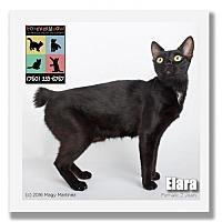 Adopt A Pet :: Elara - Palm Desert, CA
