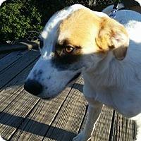Adopt A Pet :: Jessa - Pataskala, OH