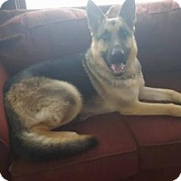 Adopt A Pet :: Sampson - Estherville, IA