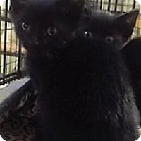 Adopt A Pet :: Sky - Forest Hills, NY