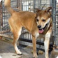 Adopt A Pet :: 45200 Bunny (active girl) - Zanesville, OH