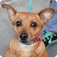 Adopt A Pet :: Bubbles! - New York, NY