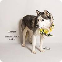 Adopt A Pet :: LOBA - Corona, CA