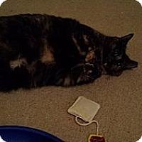 Adopt A Pet :: Tora - Stafford, VA