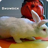 Adopt A Pet :: Snowden - Williston, FL