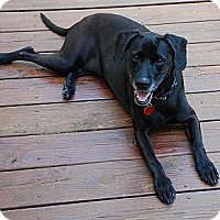 Adopt A Pet :: Daisy - courtesy posting - Lynnville, TN