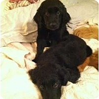 Adopt A Pet :: Kira - Denver, CO