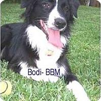 Adopt A Pet :: Bodi - Orlando, FL