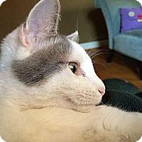 Adopt A Pet :: Highball - St. Louis, MO