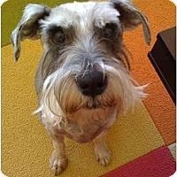 Adopt A Pet :: Pepper - Gilbert, AZ