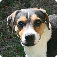 Adopt A Pet :: Ryan - Lufkin, TX