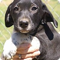 Adopt A Pet :: Jani - Plainfield, CT