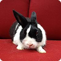 Adopt A Pet :: Xavier - Watauga, TX