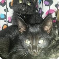 Adopt A Pet :: Sonny and Cher - Bethpage, NY