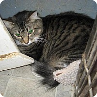 Adopt A Pet :: Harriet - Coos Bay, OR