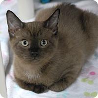 Adopt A Pet :: Nigel - Winchendon, MA